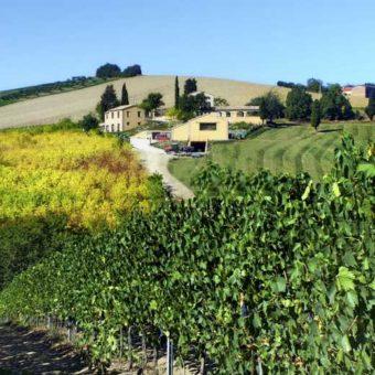 Cantina le colline - Prodotti tipici Marchigiani